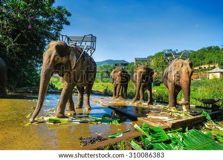 the farm of elephants not far from Dalat. Vietnam - stock photo