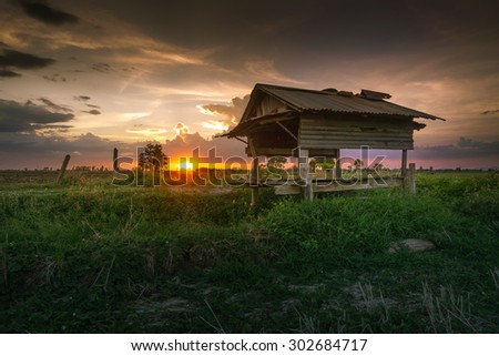 The field in the evening. - stock photo