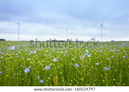 The field of blooming flax and windmill - stock photo