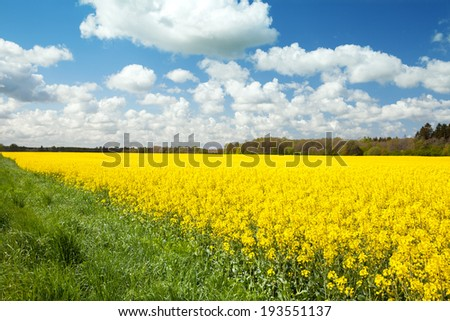 The field of rape in east Europe - stock photo