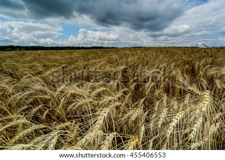 The field of ripe wheat on a background of stormy sky - stock photo