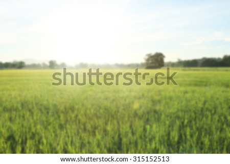 The fieldin,the sun goes up in the morning ,a picture blurs - stock photo