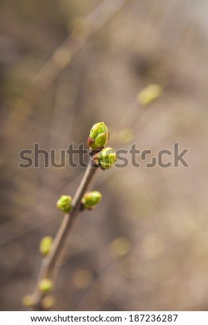 The first foliage. Spring. - stock photo