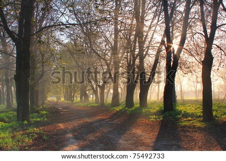 The first rays of the rising sun in misty forest - stock photo