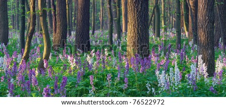 The first spring flowers in wood - stock photo