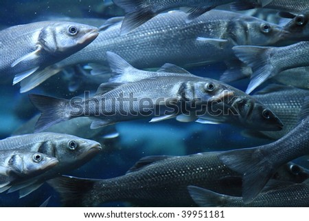 The fishes - stock photo