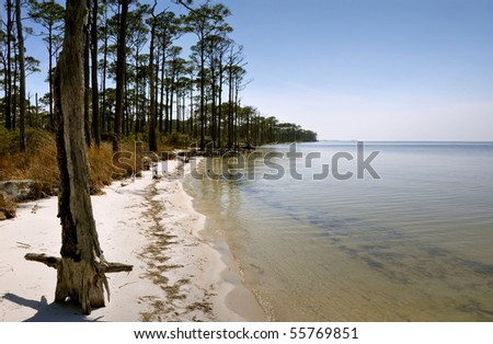 The Florida Endangered (contaminated shore). - stock photo