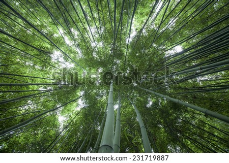 The flourish bamboo forest with glorious morning sunshine - stock photo
