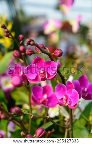 The flowers are blooming orchids. - stock photo