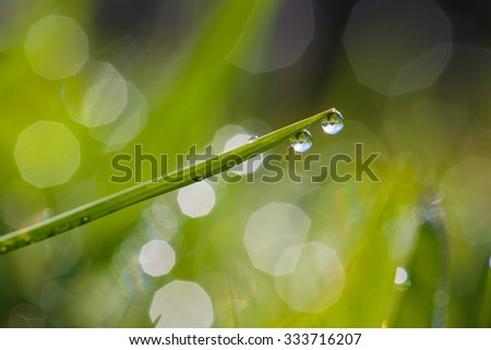 The focus of dew on the grass in the morning of a new day. - stock photo