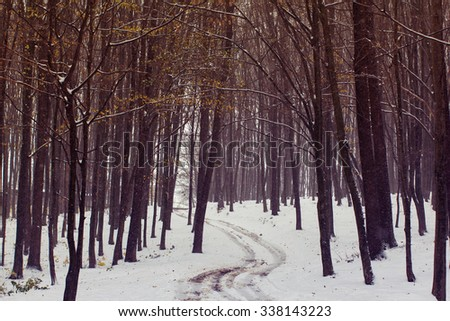 the footpath among the yellow autumn forest is covered with the first snow - stock photo