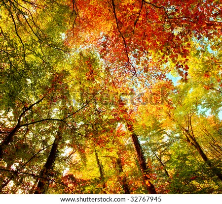 The forest in autumn - very colorful - stock photo