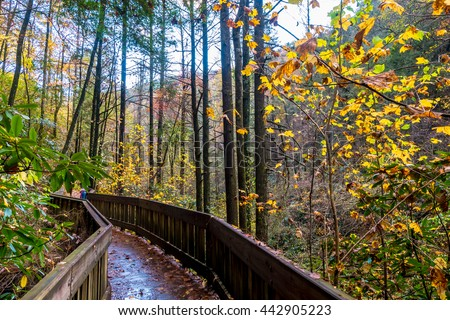 The forest trail during fall foliage season in Virginia, USA - stock photo