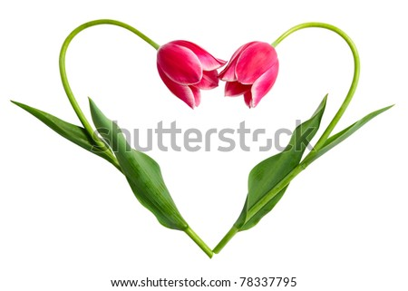 The form of heart from two tulips - stock photo
