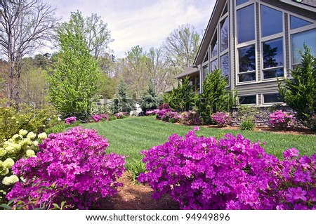 The front yard of a modern home showing the spring blooming azaleas. - stock photo