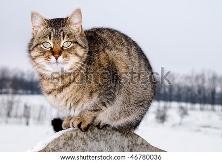 The frozen cat sits on a fence - stock photo