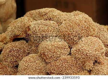 The fruit from which Aiyu jelly, a popular Chinese snack, is made. - stock photo