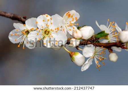 the fruits blossom  - stock photo