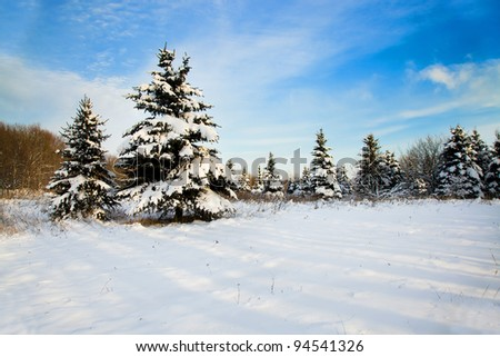 The fur-trees covered with snow in a winter season - stock photo