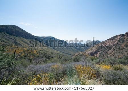 The Garden along Chisos Basin Trail - stock photo