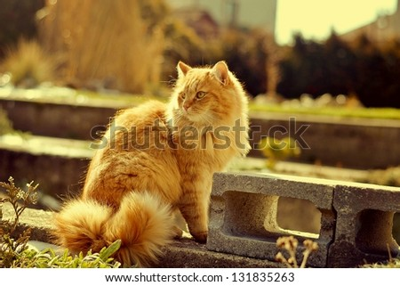 The ginger cat - stock photo