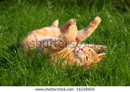 the ginger cat rolls in the grass - stock photo