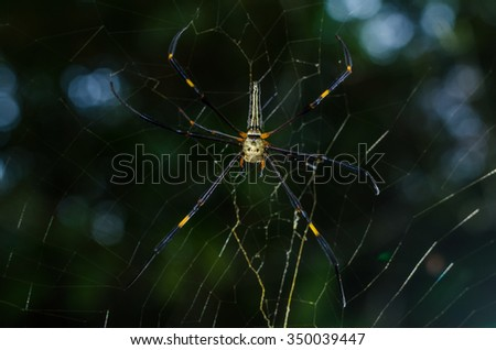 The golden web spider or human skull alike spider which rarely found in nature is climbing on spider web - stock photo