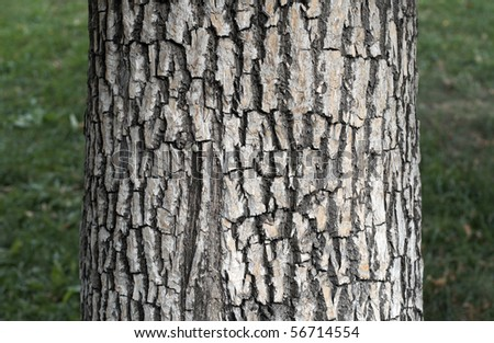 the grain bark of alone tree - stock photo