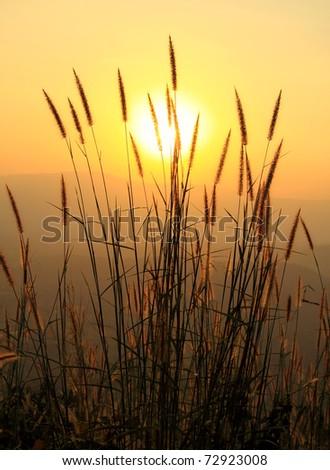 the grass and twilight sunlight - stock photo