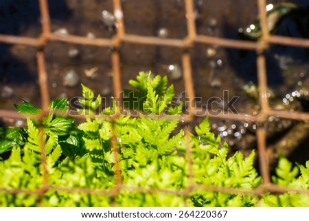 the grass in the drain - stock photo