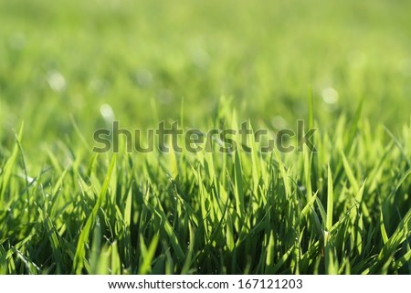 The grass on the golf course - stock photo