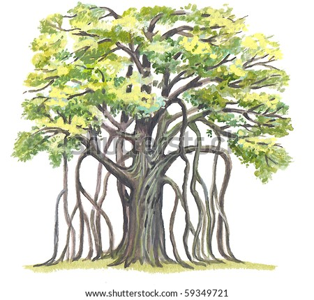 The Great Banyan (Ficus benghalensis) - has the greatest area of a crown in the World. - stock photo