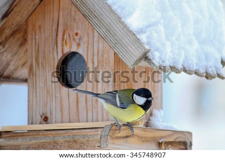 The Great tit bird (Parus major) on the wooden bird feeder with snow covering its roof during the Winter in Europe - stock photo