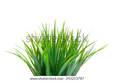 The green grass isolated on white. Side view. - stock photo