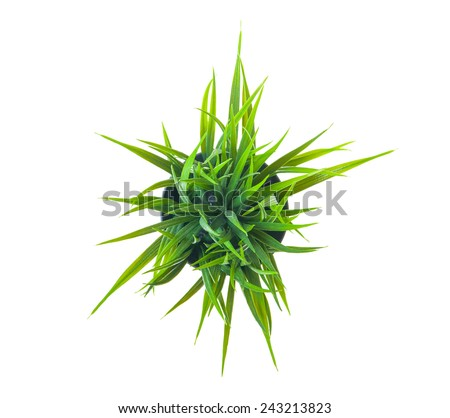 The green grass isolated on white. Top view. - stock photo