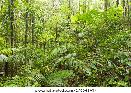 The green interior of tropical rainforest in the upper Amazon basin, Ecuador - stock photo