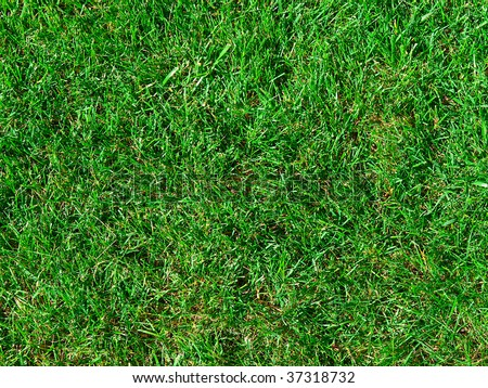 The green is juicy a grass on pratum - stock photo
