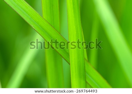 the green leaf of grass in garden  - stock photo