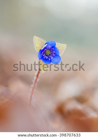 the growing first spring flowers in the forest - stock photo