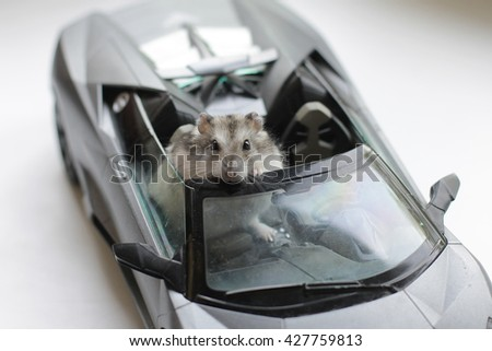 the hamster drives the abrupt toy car - stock photo
