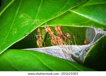 The harmony of ants - stock photo