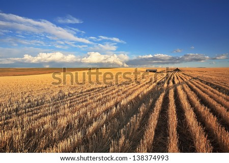The harvest in the fields of Montana. Clear skies after the storm - stock photo