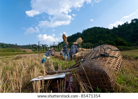 The harvest of a mountain tribe in northern Thailand. - stock photo