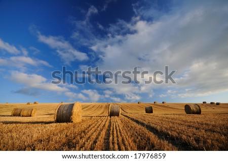 the hay circles - stock photo