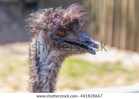 The head of an ostrich. Funny hairstyle. - stock photo