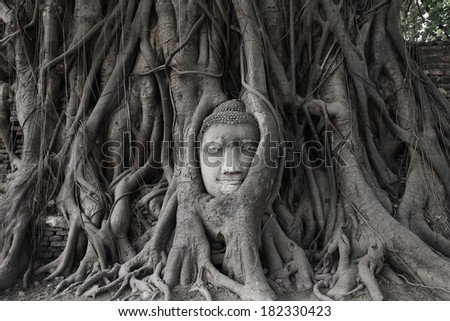 The head of the sandstone Buddha covered by roots of Bodhi tree at Wat Mahathat, Ayutthaya, Thailand - stock photo