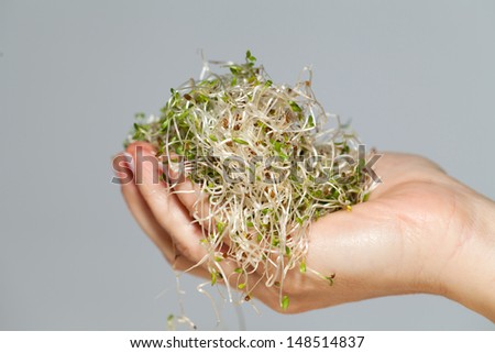 The healthy diet. Fresh sprouts isolated - stock photo