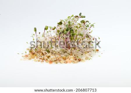 The healthy diet. Fresh sprouts isolated on white background  - stock photo