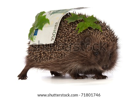 The hedgehog in motion hastens home from the bank carrying percent hundred euro profit - stock photo