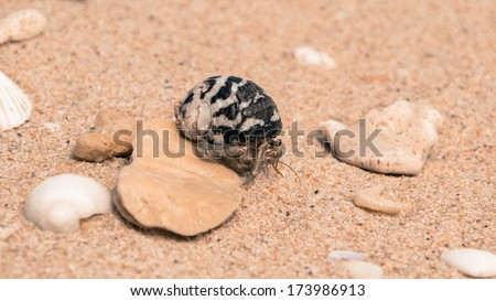 The hermit crab on the small rock/Hermit Crab/A small hermit crab - stock photo